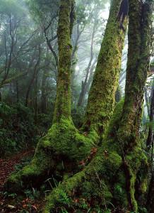IMG_Beech Tree