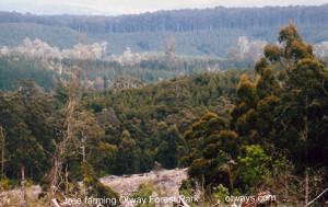 IMG_Tree Farming