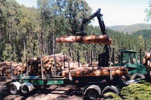 IMG_Tree harvesting1